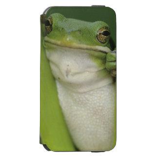 大人緑のTreefrogのcinereaアマガエル属湖 Incipio Watson™ iPhone 6 財布ケース