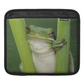大人緑のTreefrogのcinereaアマガエル属湖 iPadスリーブ