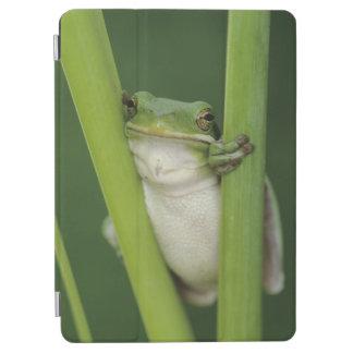 大人緑のTreefrogのcinereaアマガエル属湖 iPad Air カバー