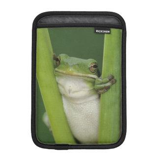 大人緑のTreefrogのcinereaアマガエル属湖 iPad Miniスリーブ