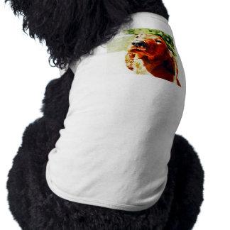 大切なアイリッシュセッターの子犬 ペット服