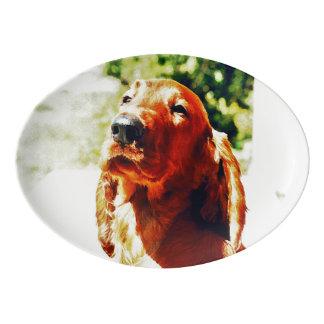 大切なアイリッシュセッターの子犬 磁器大皿