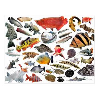 大型熱帯魚の写真入りの製品 ポストカード