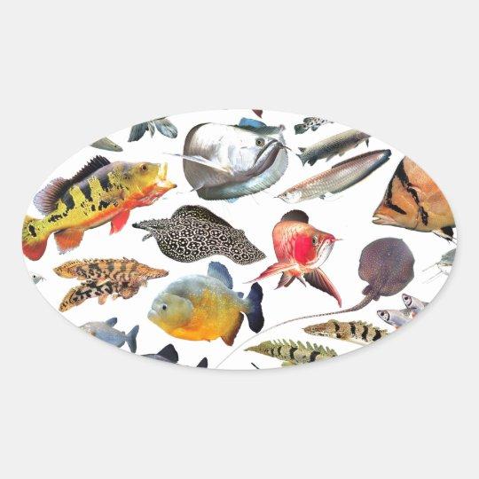 大型熱帯魚 楕円形シール