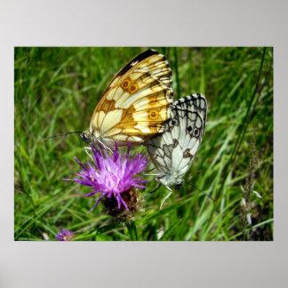 大理石模様をつけられた白い蝶ポスター ポスター