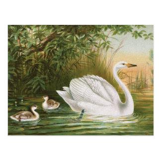 """""""大白鳥""""のヴィンテージの鳥のイラストレーション ポストカード"""