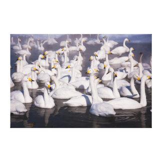 大白鳥、北海道、日本 キャンバスプリント