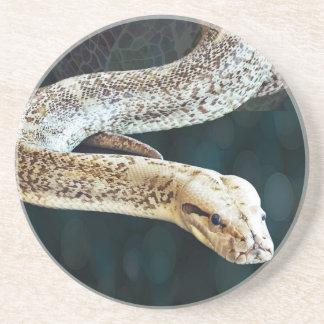 大蛇のヘビ コースター