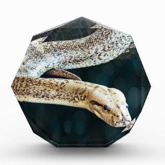 大蛇のヘビ 表彰盾