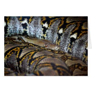 大蛇の写真 カード