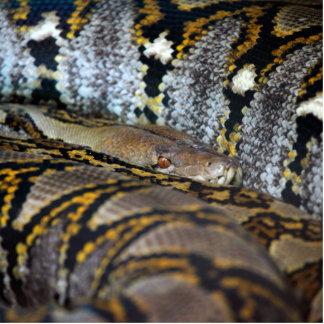 大蛇の写真 フォトスカルプチャー