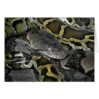 大蛇のmolurusのbivittatus カード