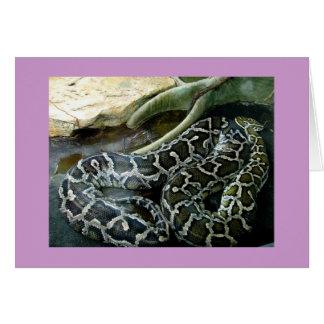 大蛇 カード