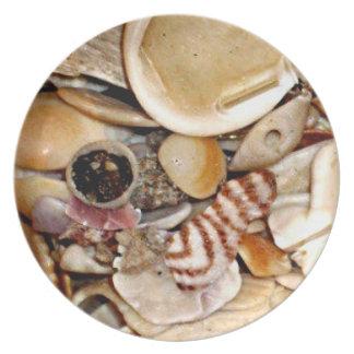 大西洋の海の貝のコレクション プレート