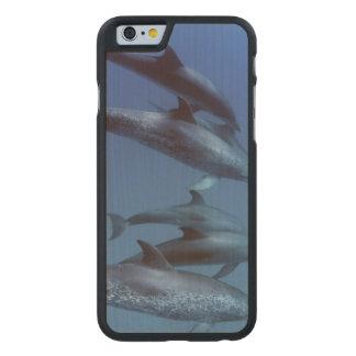 大西洋はイルカに斑点を付けました。 Bimini、バハマ ケース