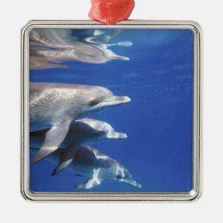 大西洋はイルカに斑点を付けました。 Bimini、バハマ。 10 メタルオーナメント