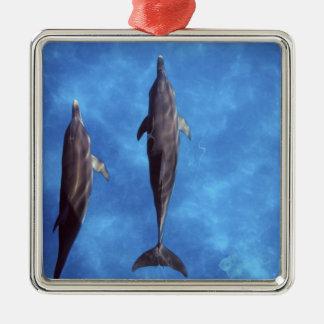 大西洋はイルカに斑点を付けました。 Bimini、バハマ。 3 メタルオーナメント