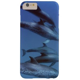 大西洋はイルカに斑点を付けました。 Bimini、バハマ Barely There iPhone 6 Plus ケース