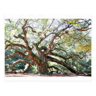 天使のオークの木のギフト ポストカード