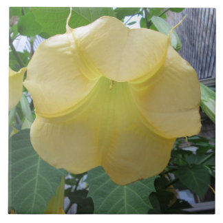 天使のトランペットの金黄色い花 タイル
