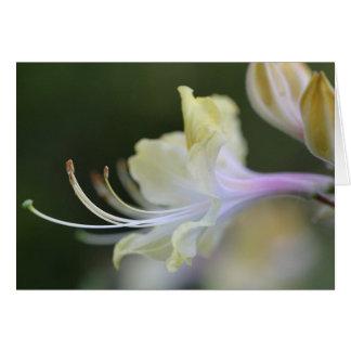 天然ツツジの開花のブランクNotecard カード