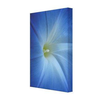 天空の青い朝顔の花の写真 キャンバスプリント