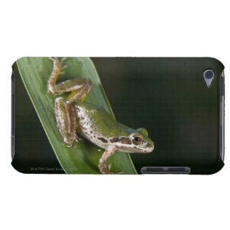 太平洋のアマガエル(Pseudacrisのregilla) Case-Mate iPod Touch ケース
