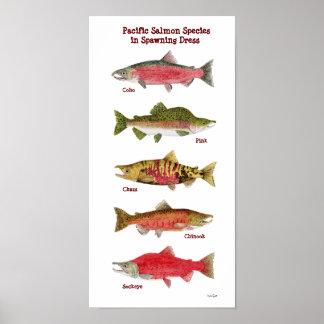 太平洋のサーモンピンク種の芸術ポスター ポスター