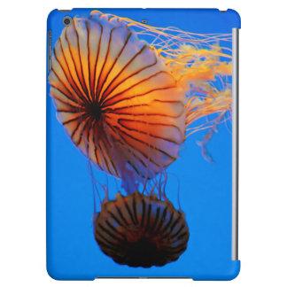 太平洋の海のイラクサ(Chrysaora Fuscescens)