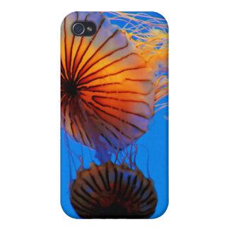 太平洋の海のイラクサ(Chrysaora Fuscescens) iPhone 4 ケース