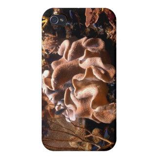 太平洋の珊瑚礁のiPhoneの場合 iPhone 4 ケース