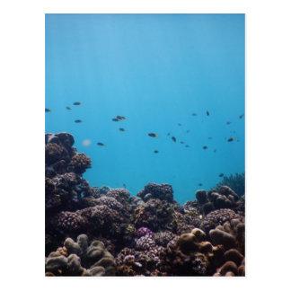 太平洋の珊瑚礁 ポストカード