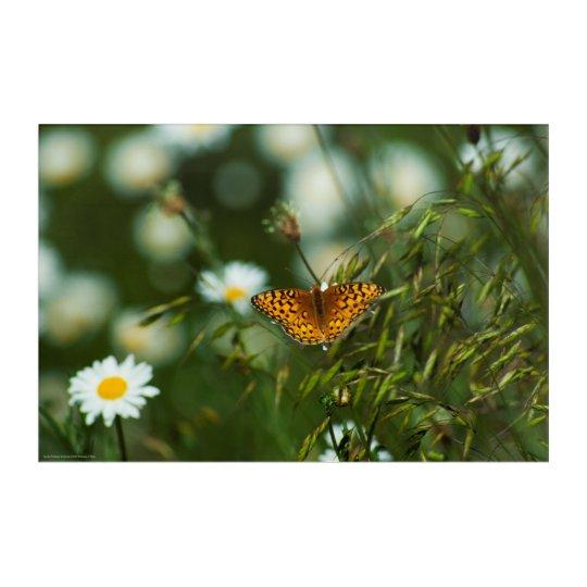 太平洋のFritillaryの蝶 アクリルウォールアート