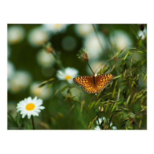 太平洋のFritillaryの蝶 ポストカード