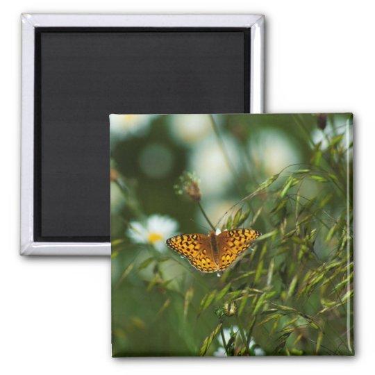 太平洋のFritillaryの蝶 マグネット
