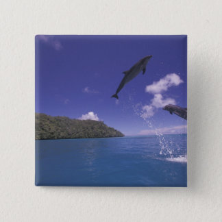 太平洋、ミクロネシア、パラオ諸島のBottlenose 3 5.1cm 正方形バッジ