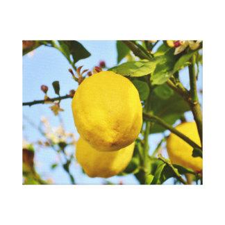 太陽で育つレモン キャンバスプリント