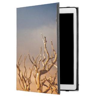 """太陽に照らされたツリーブランチのワタリガラス、グランドキャニオン iPad PRO 12.9"""" ケース"""