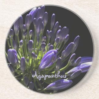 太陽に照らされた咲く紫色のアガパンサス属、アフリカユリ コースター