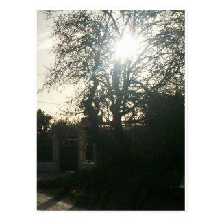 太陽に照らされた木 ポストカード