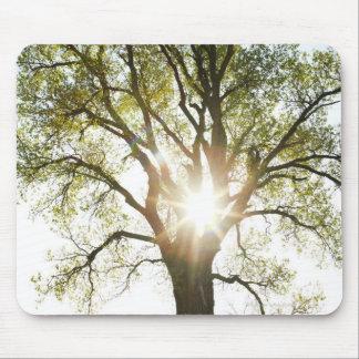 太陽に照らされた木 マウスパッド