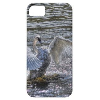 太陽に照らされた湖水で身繕いしているコブハクチョウ iPhone SE/5/5s ケース