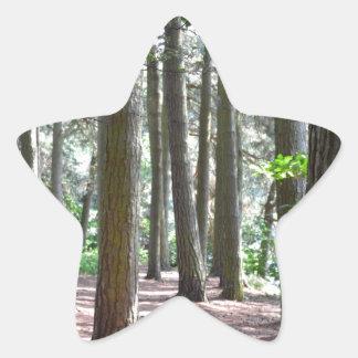 太陽に照らされた 森林 床 星形シール・ステッカー