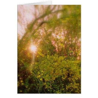 太陽に照らされたPalo Verdeの柔らかい白熱挨拶状 カード