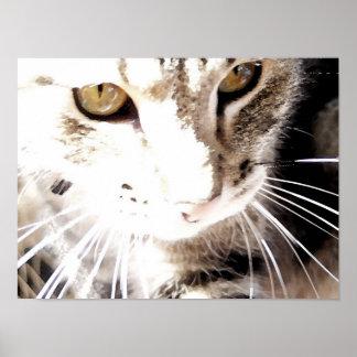 太陽の猫 ポスター