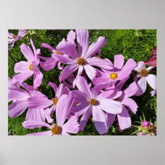 太陽の紫色の花 ポスター
