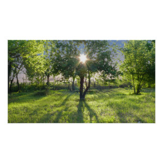 太陽光線 ポスター