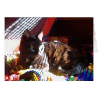 太陽猫のリターン カード