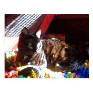 太陽猫のリターン ポストカード