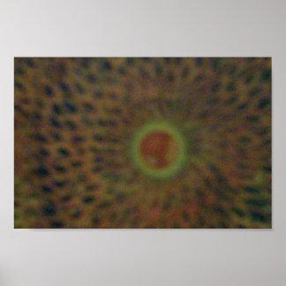 太陽食 ポスター
